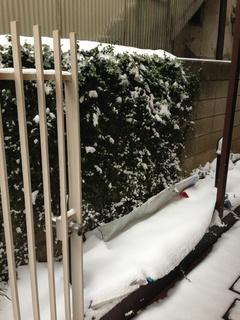 イシイの小話(雪だ!)