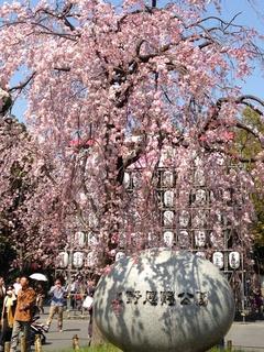 イシイの小話(桜)